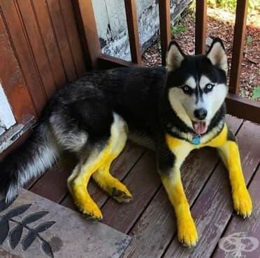 20 снимки на кучета, попаднали в неловка ситуация - изображение