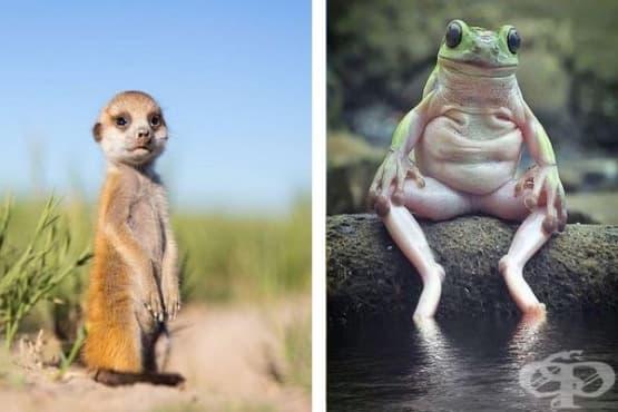 22 интересни факта за животните - изображение