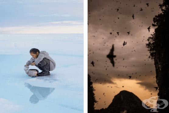 Най-добрите снимки на National Geographic за 2019 година - изображение