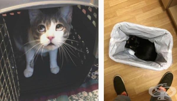 30 смешни котки, които се крият, за да избегнат посещението при ветеринар - изображение