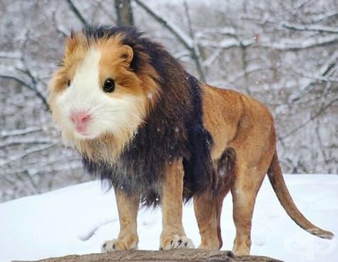 30 екзотични хибридни животни, които биха били любопитни в реалния живот - изображение