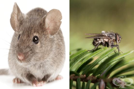 Животни с най-кратък живот на Земята - изображение