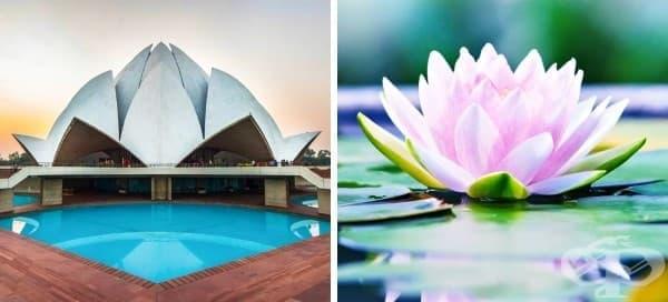 10 невероятни архитектурни чудеса, вдъхновени от природата - изображение