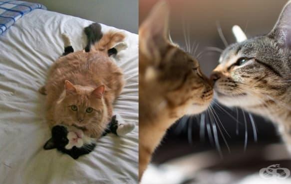14 котки, готови за Св. Валентин - изображение