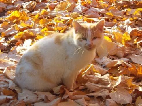 Красива снимка на котка насред есенни листа - изображение