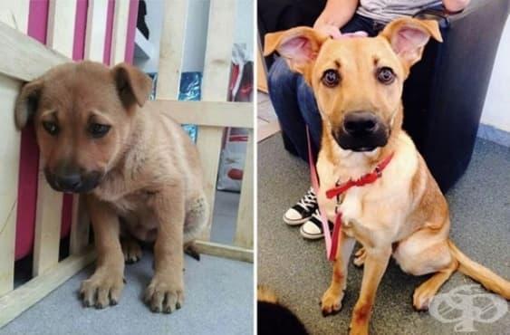 15 домашни любимци преди и след като са взети от приюта за животни - изображение