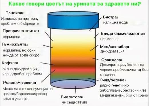 Какво говори цветът на урината за здравето ви? - изображение