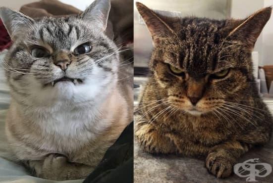 20 от най-сърдитите котки на света - изображение