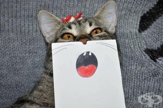 Тази котка с нарисувани лицеви изражения е всичко, което ви трябва, за да избухнете в смях! - изображение