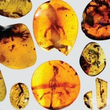 Вижте фотография на най-стария хамелеон, открит в кехлибар на 99 милиона години - изображение