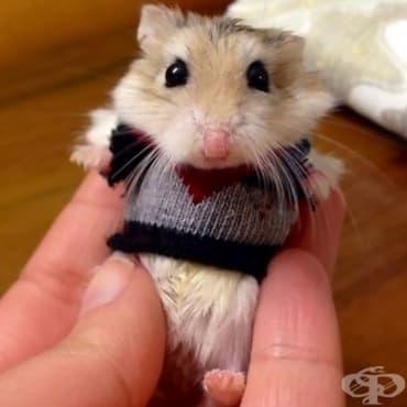 15 животни, облечени в пуловери - изображение