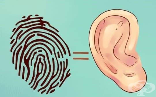 Какво разкриват ушите ви за вас - изображение