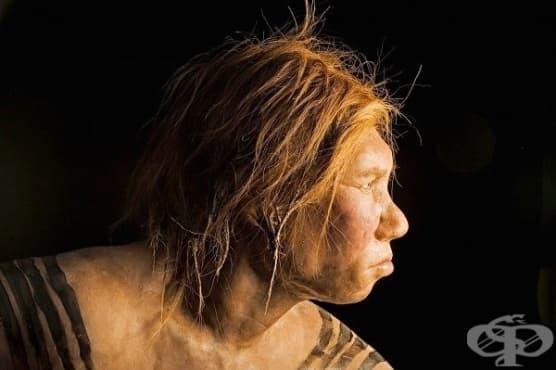 Открит е първият череп на представител на вида Денисов човек - изображение