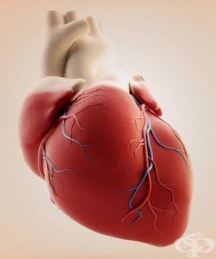 Шести сърдечен тон - откритието на професор Иван Митев - изображение