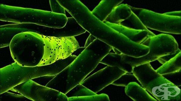 Проучвания за съществуването на туберкулозата в предколумбова Америка от края на 90-те години на 20-век  - изображение