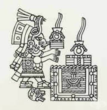 """Роля на """"Бадианския свитък"""" от 1552 година за развитието на билколечението, 2 част - изображение"""