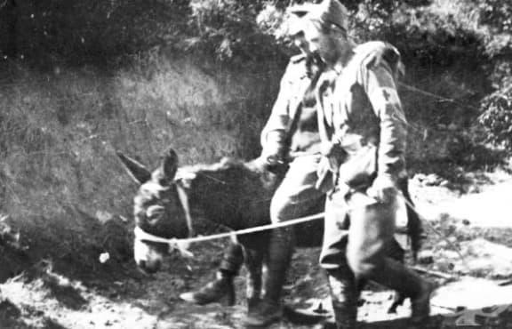 Военният медик, пренесъл десетки ранени през фронта на гърба на магаре - изображение