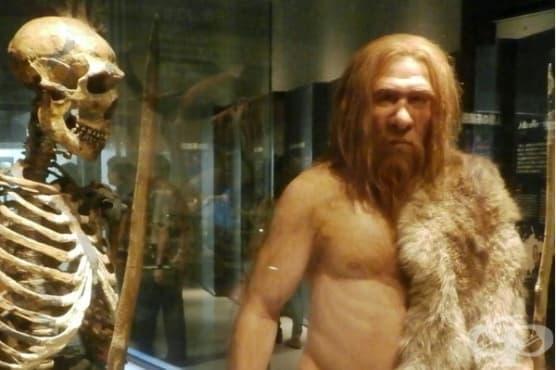 Възможно ли е неандерталците да са имали медицински познания - изображение