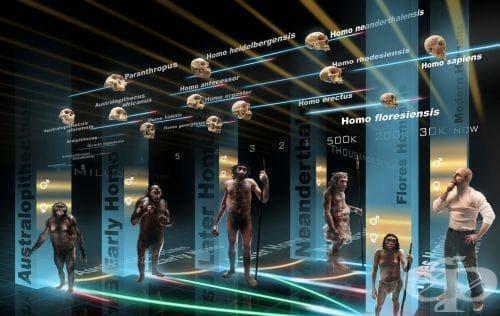 Етапи от историята на човешката еволюция - изображение
