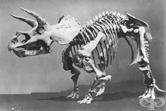 Фосилите в древната медицина, част 1 - Кости на гиганти и останки от дракони - изображение