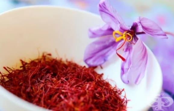 Историята на шафрана като лечебно средство - от древността до наши дни - изображение
