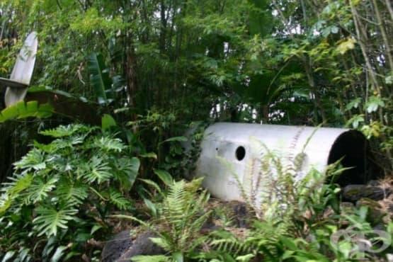 Момичето, оцеляло 11 дни в джунглата след самолетна катастрофа - изображение