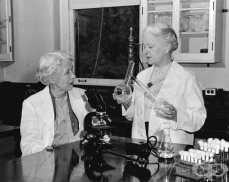 Заедно в науката: Елизабет Хейзън и Рейчъл Браун и откриването на нистатина – 1 част - изображение