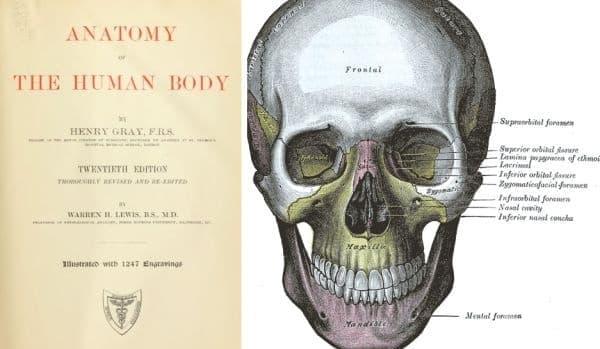 """""""Анатомията на Грей"""" – популярна английска медицинска книга върху човешката анатомия от 19-ти век  - изображение"""