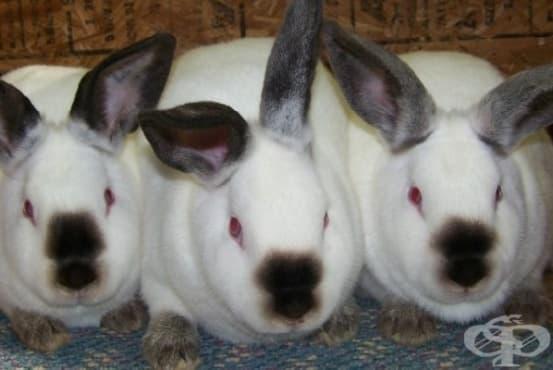 Как жена успява да излъже лекарите, че е родила зайци - изображение