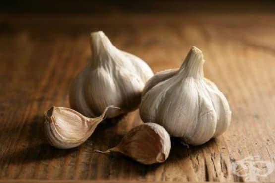 Познания за чесъна, съхранени от гръцката и римската история на медицината - изображение