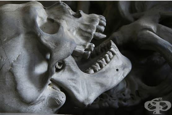 """""""Вампирско погребение"""" в римско гробище за покосени от малария деца - изображение"""