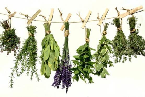 Древни билкови средства за предизвикване на аборт - изображение