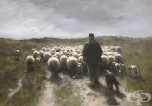 Как през 17-ти век в Англия се опитват да създадат човек-овца чрез кръвопреливане - изображение