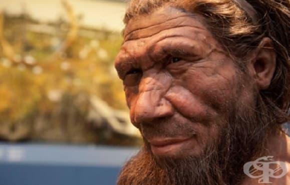 """""""Първобитните"""" неандерталци са се грижили за своите съплеменници с увреждания - изображение"""