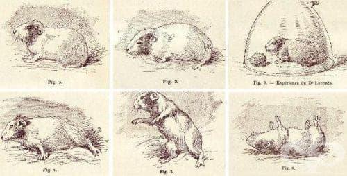 Експерименти с екстракт от пелин върху животни - изображение