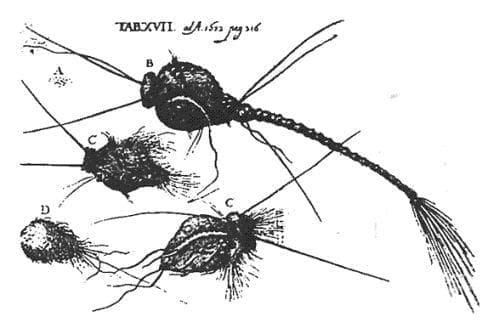 Естество на синдрома на пълзящата кожа - изображение