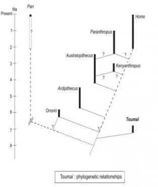 Хомо флоренсис като част от човешката еволюция - изображение