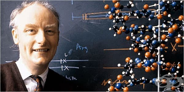 Франсис Крик и изследванията му в областта на генетиката: Ранен живот и кариера до 1943 г. - изображение