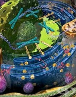 Френска школа по молекулярна биология - изображение