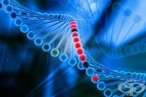 Генно инженерство: исторически моменти от миналото и настоящето, касаещи ДНК - изображение
