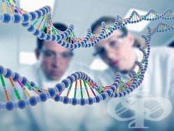 Опити и хипотези за направата на ДНК от нуклеина - изображение