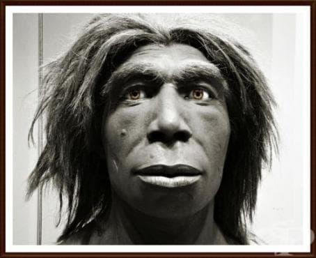 Хомо еректус пекиненсис като част от човешката еволюция - изображение
