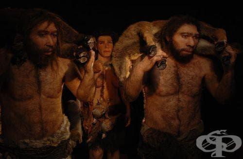 Хомо хайделбергенсис като част от човешката еволюция - изображение