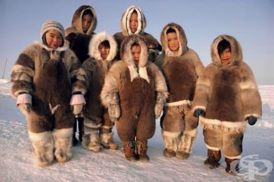 Генетичният код на инуитите ги прави по-здрави, но и по-ниски - изображение