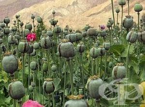 Исторически факти за древните египетски наркотични средства - изображение