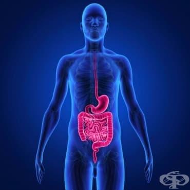 История на гастроентерологията в медицинската наука - изображение