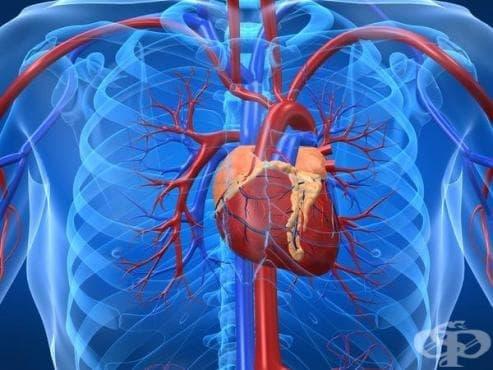 История на кардиологията - изображение