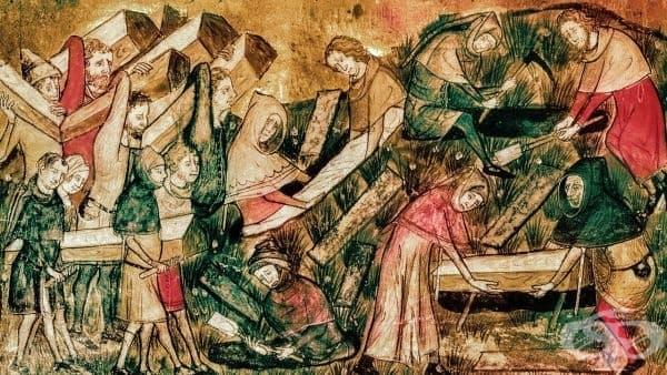 История на патологията - изображение