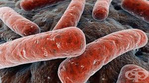 История на туберкулозата - изображение