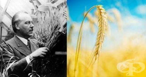 Изследвания на Николай Вавилов върху земеделските култури - изображение